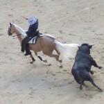Madridská korida – šest padlých býků během dvou hodin