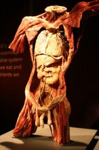 Výstava Bodies, zdroj: www.bodiesbrno.cz