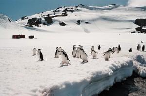 Antarktida, autor: Mart Eslem