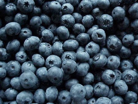 blueberry_fruits5457
