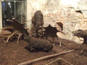 Kterak hyeny dostávaly na frak,zdroj domácí archiv
